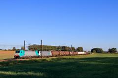489127 Anvers - Sibelin (AziroxY) Tags: trains trainspotting train photo photographie plm photosncf soleil sncf lineas citerne fret france fretsncf traxx railpool