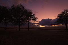 Ya no queda sol...276/365 (cienfuegos84) Tags: sunset ocaso arboles