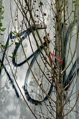 wall near Alexanderplatz, Berlin _DSC6550-105ND800 (horstg1) Tags: ribbon red wall concrete tree leaves grafitti berlin