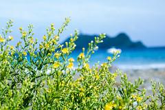Kallisté, of Corse! (dominiquita52) Tags: corsica kalliste capcorse barcaggio barcajhiu gio corse