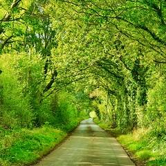 Country lane (Ugborough Exile) Tags: churcheaton stafford staffordshire midlands england uk s10 2019