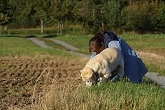 Spass beim Buddeln (glaserei) Tags: iva labrador labi retriever hund haustier