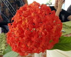 kerala flowers (2) (kexi) Tags: kerala india asia flowers red samsung wb690 february 2017 instantfave