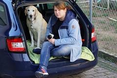 Hund und Frauchen (glaserei) Tags: iva labrador labi retriever hund haustier