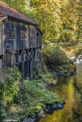 Autumn reflections in the water (lamoustique) Tags: cedargristmill water reflections fall colors gold woodland washington usa