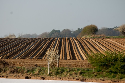 Freshly planted fields