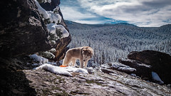 _1110220 (jeffreyshanor) Tags: travel mountains nature outside explore national leisure dog snow cold tree clouds puppy outdoors waterfall puppies scenery husky rocks scenic rocky huskies adventure doggo
