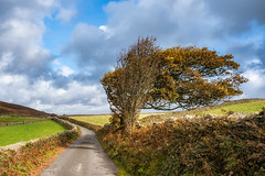 10th October 2019 (Rob Sutherland) Tags: lowick common beacon lane track road autumn autumnal fall colour color farm farmland field wall drystone cumbria cumbrian england english uk britain british rural countryside typical traditional lakes lakeland lakedistrict nationalpark ldnp