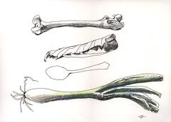 Bone, leaf, spoon and scallion (Marcia Milner-Brage) Tags: naturestudy stilllife inktober uniballpen coloredpencil stillmanbirnbeta marciamilnerbrage