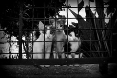 Vathi souvenir (feray umut) Tags: cat cats animal animals travel blackandwhite places island greece