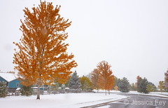 October 10, 2019 - Snow and fall colors. (Jessica Fey)
