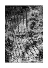 fence's end (Armin Fuchs) Tags: arminfuchs nomansland fence hff light shadows grass niftyfifty anonymousvisitor thomaslistl wolfiwolf jazzinbaggies
