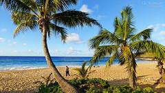 A Morning on the Beach - Sandy Beach - Oahu, Hawaii (J.L. Ramsaur Photography) Tags: jlrphotography nikond7200 nikon d7200 photography photo oahuhi 25thanniversary honolulucounty hawaii 2019 engineerswithcameras islandsofhawaii photographyforgod hawaiianislands islandphotography screamofthephotographer ibeauty jlramsaurphotography photograph pic oahu tennesseephotographer oahuhawaii 25years anniversarytrip bucketlisttrip thegatheringplace 3rdlargesthawaiianisland 20thlargestislandintheunitedstates therainbowstate sandybeach sandy wife palmtrees seascape oceanview seashore wherethemapturnsblue ilovethebeach ocean beach bluewater blueoceanwater sea waves sand pacificocean bluesky deepbluesky beautifulsky whiteclouds clouds sky skyabove allskyandclouds landscape southernlandscape nature outdoors god'sartwork nature'spaintbrush god'screation sandybeachpark beachtime
