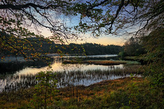 Autumn morning, Norway (Vest der ute) Tags: xt2 norway rogaland haugesund eivindsvatnet waterscape water sky trees earlymorning grass autumn landscape lake fav25 fav200