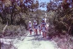 Kaalvoet part II (Sheldrickfalls) Tags: madumaboma hoedspruit limpopo southafrica urgineaaltissima tallwhitesquill elephantstrunk