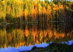 The autumn colors.