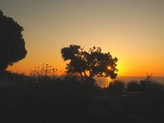 SONNENAUFGANG ÜBER DEM MITTELMEER P9290589 (hlh 1960) Tags: nature natur landschaft landscape tree baum pflanzen blumen flower geländer aussichtspunkt gras farben colour golden licht light meer mittelmeer himmel sky silhouetten spanien spain espania sun sunrise sonne sonnenaufgang sol soleil atardecer