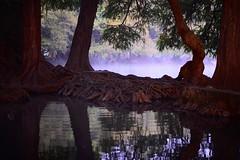 LE MATIN. (NIKONIANO) Tags: trees naturaleza nature water landscape agua árboles surreal explore onexplore flickrexplore enexplore lematin matin aube lake lago ellago lagodecamécuaro méxico paisajemexicano mexicanlandscape