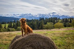 The Tatras have never looked so majestic before. • • • • • #dogsofinstagram #hikingdogsofinstagram #hikingdogsofinsta #hikingwithdogs #explorewithdogs #dogsthathike #dogsonadventures #thegreatoutdogs #backcountrypaws #mountainlife #adventurewithdogs #adve (watson_the_adventure_dog) Tags: the tatras have never looked majestic before • dogsofinstagram hikingdogsofinstagram hikingdogsofinsta hikingwithdogs explorewithdogs dogsthathike dogsonadventures thegreatoutdogs backcountrypaws mountainlife adventurewithdogs adventuredogsofficial adventurepups hikingdog hikingdogs outdoordogs campingdog tatry tatramountains dogswhohike
