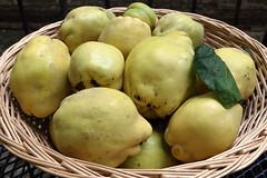 Quitten, welche Wonne, 6 kg (julia_HalleFotoFan) Tags: cydoniaoblonga quitten kernobstgewächse birnenquitten obst früchte