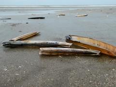 Razor clams (sander_sloots) Tags: beach ensis scheermes schelp shell clam rasor dctz90 panasonic lumix hoek van holland rotterdam strand zand sand sea northsea zee noordzee kust coast