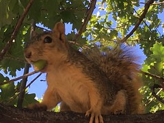October 7, 2019 - A curious and hungry squirrel in Thornton. (LE Worley)