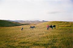 wildlife loop (szmenazsófi) Tags: smenasymbol lomo smena analog analogue film outdoor nature grassland prairie green scenery ladnscape 35mm custerstatepark southdakota wildlifeloop