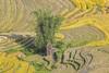 _29A1682.0919.A Lù.A Mú Sung.Bát Xát.Lào Cai (hoanglongphoto) Tags: asia asian vietnam northvietnam northernvietnam northeastvietnam landscape scenery vietnamlandscape vietnamscenery terraces terracedfields terracedfieldsinvietnam morning morningsunshine sunny sunlight harvest seasonharvest bambo canon canoneos5dsr đôngbắc làocai bátxát amúsung alù thunglũngalù ruộngbậcthang buổisáng nắng nắngsớm lúachín mùagặt ruộngbậcthangalù alùmùagặt alùmùalúachín phongcảnhalù canonef500mmf4lisiiusm people landscapeandpeople người phongcảnhcóngười