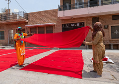 Indian women drying red saris in the street, Rajasthan, Jodhpur, India (Eric Lafforgue) Tags: adults adultsonly asia business colorful colourimage coloured culture day fabric factory handmade horizontal india india192624 indian industry jodhpur outdoors rajasthan red saree sarees sari sarifabric saris street textile textilefactory textileindustry traditionalclothing twopeople women womenonly workers
