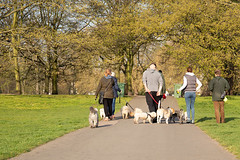 Happy group of people walking with dogs in the park. (dogdaystipsandtraining) Tags: bichons jackrussellterrier adorable animal beautiful cheerful cold cute dog family female friend friendship fun girl grass green group happiness happy leisure lifestyle little love moring nature old outdoor outside park people person pet play playful playing puppy retire running senior spring summer sunlight sunshine together tree walk walking young thailand