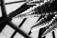 Chihuly at Kew (Francis Mansell) Tags: chihuly dalechihuly sculpture artwork glass kew royalbotanicgardenskew kewgardens temperatehouse monochrome blackwhite niksilverefexpro2 grainy glasshouse