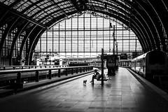 Antwerpen-Centraal railway station (marikoen) Tags: antwerp streetphotography blackandwhite
