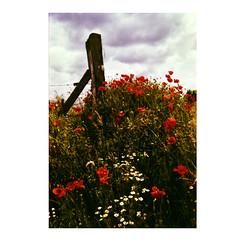 Img_613 (aurelius.schoewever) Tags: nikon f100 film format small 35mm color