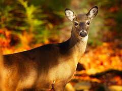 Deer in the Cove (QuakerVille) Tags: jonmarkdavey art