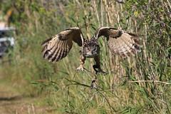 Birds & Exotics - Luis Carballo (QuakerVille) Tags: jonmarkdavey art birdsexoticsluiscarballo