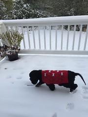 October 10, 2019 - A pup stays warm with a sweater on a snowy day. (Sandy Figueroa)