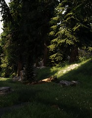 Forest Clearing (Quiet Naiad) Tags: tesv skyrim scenery landscape screenshot screenarchery grass