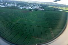 Martinique bananes (muscapix) Tags: aerialview vueaérienne avion plane fly travel voyage martinique ciel sky agriculture bananes antilles caraïbes rx10iii