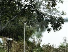 "Hidden object game: ""Find the heron"" (PattyK.) Tags: nature heron bird lake pamvotida lakepamvotida ioanninalake lakeside lakefront epirus greece griechenland ellada october autumn 2019 ιωάννινα ελλάδα βαλκάνια λίμνη λίμνηπαμβώτιδα παμβώτιδα ερωδιόσ πουλί φύση οκτώβριοσ φθινόπωρο snapseed nikond3100"