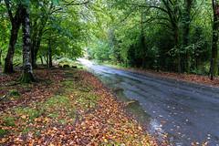 Very wet around Burrator - NK2_8329 (Jean Fry) Tags: burrator dartmoor dartmoornationalpark devon englanduk roads trees uk westcountry woodland autumn autumnleaves wetroads wetweather