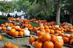 _DSC7156 (horslips5) Tags: newengland chatham capecod massachusetts fall autumn