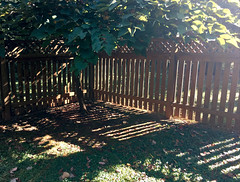backyard shadowplay (karma (Karen)) Tags: baltimore maryland home backyard shadows shadowplay trees leaves fences hff