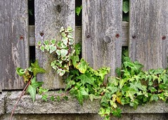Break Out (linda.addis) Tags: flickrlounge weeklytheme gatesfences