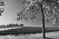 Lungo il confine tra reale ed irreale (Paolo Bonassin) Tags: bw monochrome blackandwhite bianconero infrared italy emiliaromagna zolapredosa zolapredosaviaraibolinidettoilfrancia visionedellafotografia