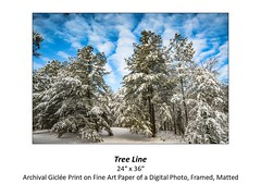 """Tree Line • <a style=""""font-size:0.8em;"""" href=""""http://www.flickr.com/photos/124378531@N04/48880415716/"""" target=""""_blank"""">View on Flickr</a>"""