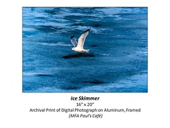 "Ice Skimmer • <a style=""font-size:0.8em;"" href=""http://www.flickr.com/photos/124378531@N04/48880415841/"" target=""_blank"">View on Flickr</a>"