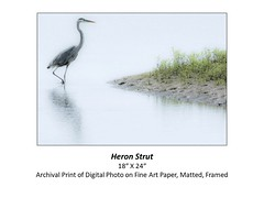 "Heron Strut • <a style=""font-size:0.8em;"" href=""http://www.flickr.com/photos/124378531@N04/48880415846/"" target=""_blank"">View on Flickr</a>"