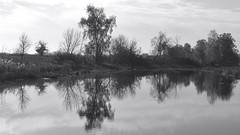 Reflection in the pond. Monochrome. (ALEKSANDR RYBAK) Tags: изображения монохромный пруд вода поверхность отражение деревья природа пейзаж images monochrome pond water surface reflection trees nature scenery