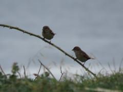 IMG_1111 (jesust793) Tags: pájaros birds naturaleza nature