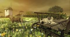 Pug Family (larisalyn (Rachel)) Tags: pugs dogs windmill horse trees sunset sunrise secondlife